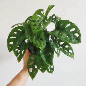 Zelené rastlinky